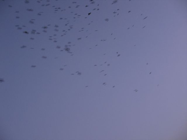 birds_above03