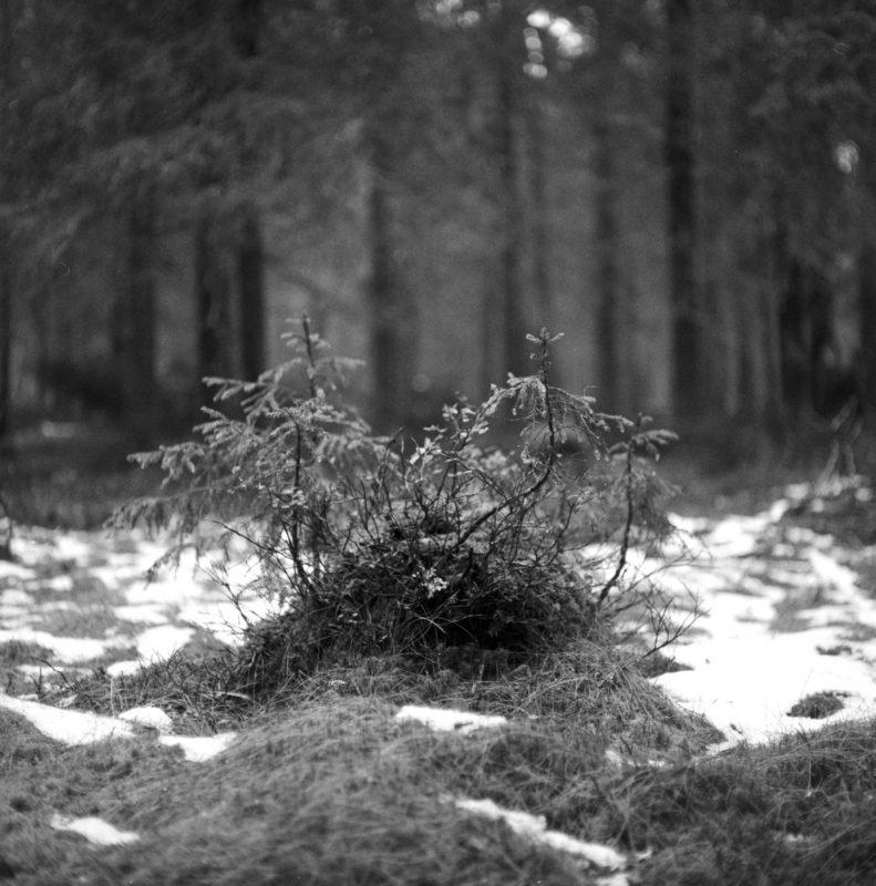 Paljakka forest Mamiya C220 TriX320
