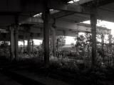 soviet rural ruins 05