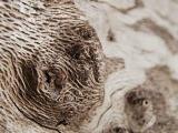 desert macro photo by john grzinich