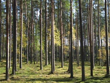 gyre forest