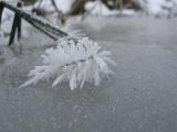 ice crystallization in Estonia 03.jpg