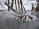ice crystallization in Estonia 08.jpg