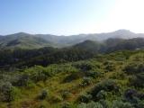 Headlands landscapes 09